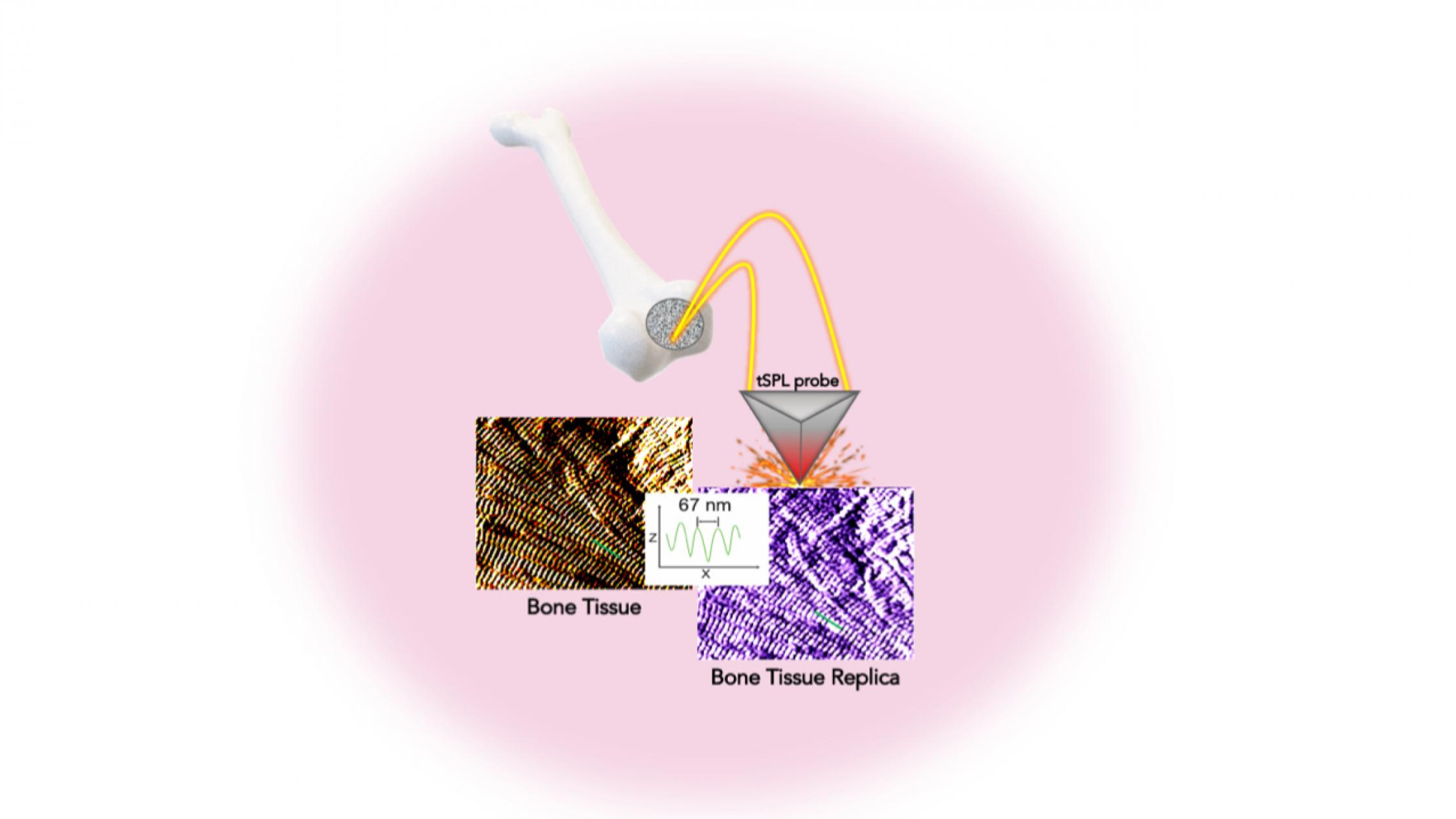 diagram shows close-up of bone tissue and the bone tissue replica