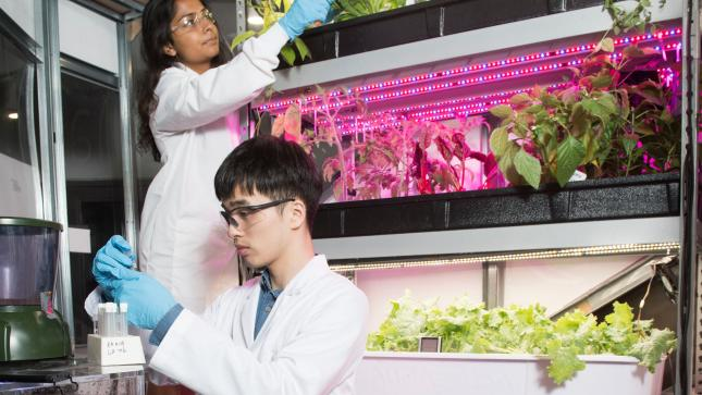 students in lab coats working with plants