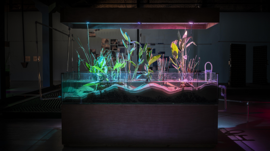 A tank with wetland plants lit up
