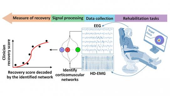 A schematic of the CorticoMuscular monitoring system. EEG and HDEMG reading are taken while a person goes through rehab exercises to identify cordiocomuscular networks. This leads to a recovery score, shown on a line graph.