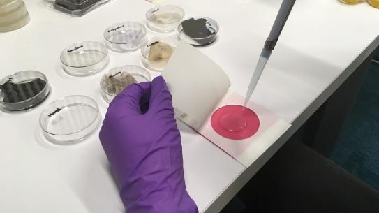 gloved hand and petri dishes