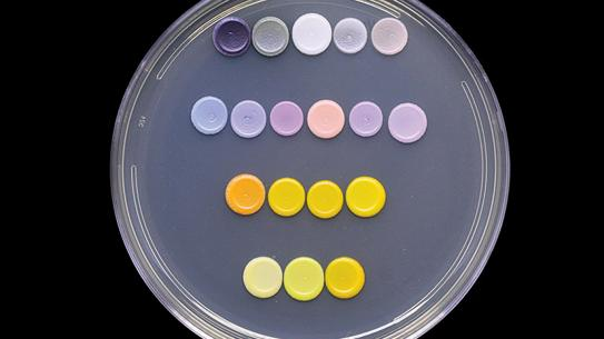 samples in a petri dish