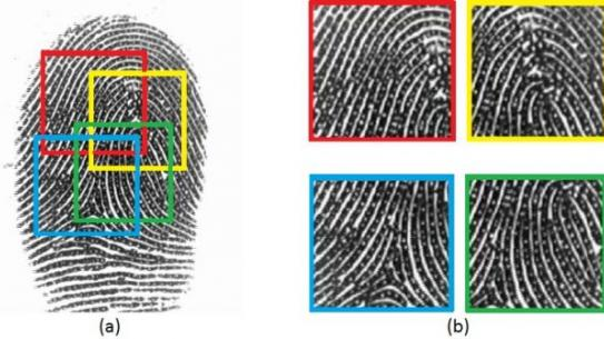 diagram explaining fingerprint capture
