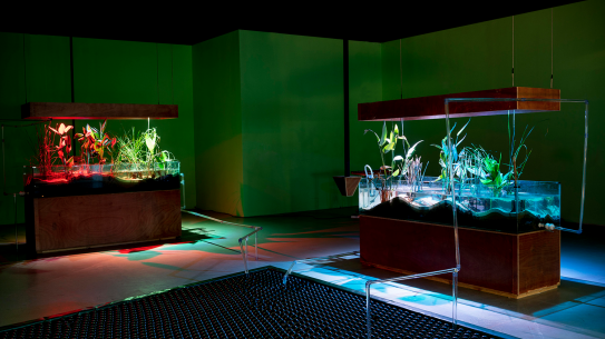 Three fish tanks filled with wetland species and one filled with sunshade balls