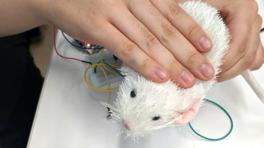 Hand rubbing over an artificial bunny connected to sensors