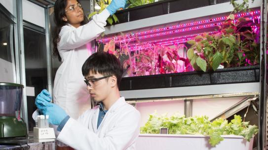Students working in the vertical farms with lab coats