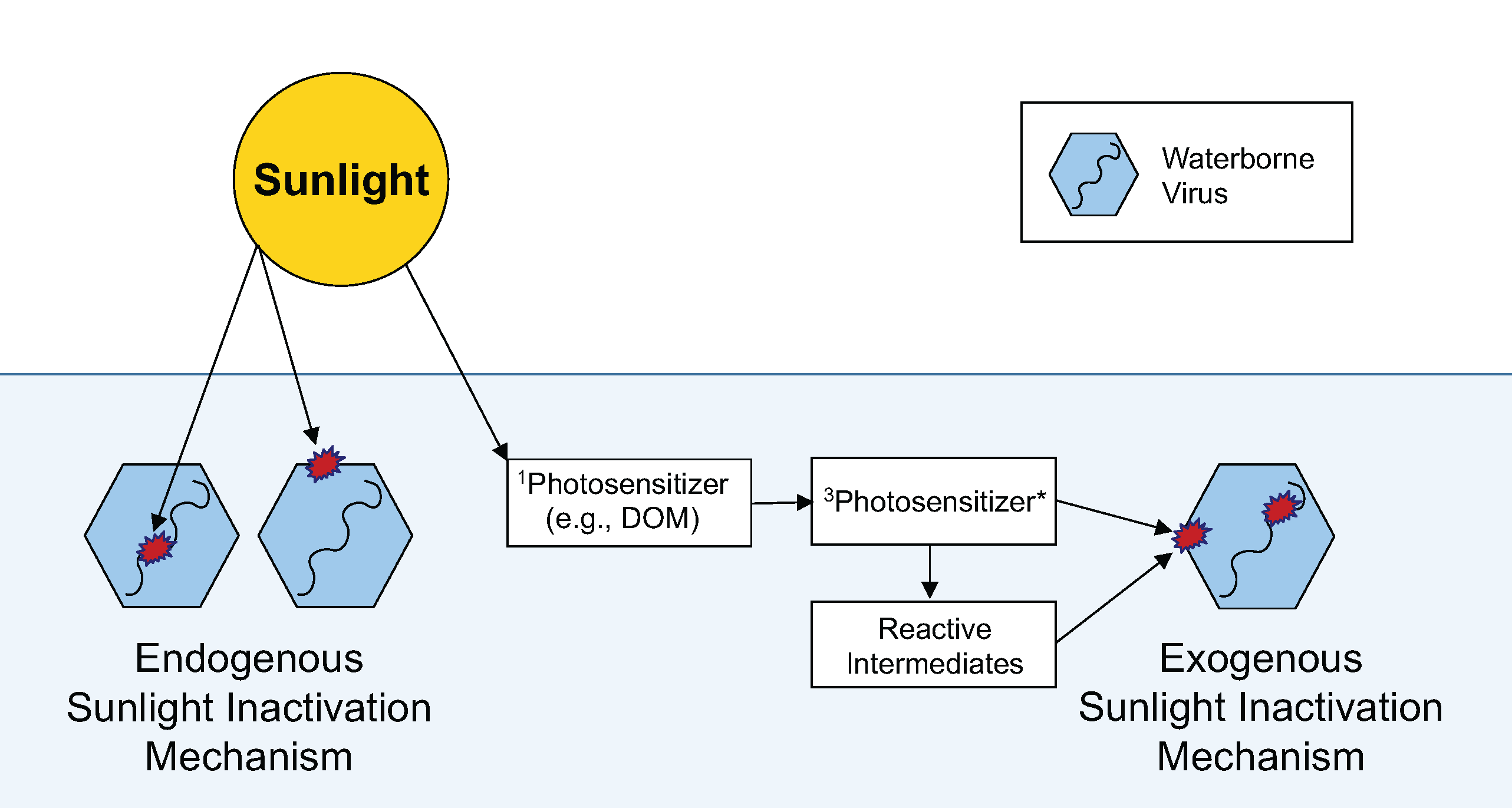 Diagram of water bacteria and sunlight