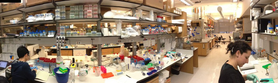 panorama image of the gresham lab